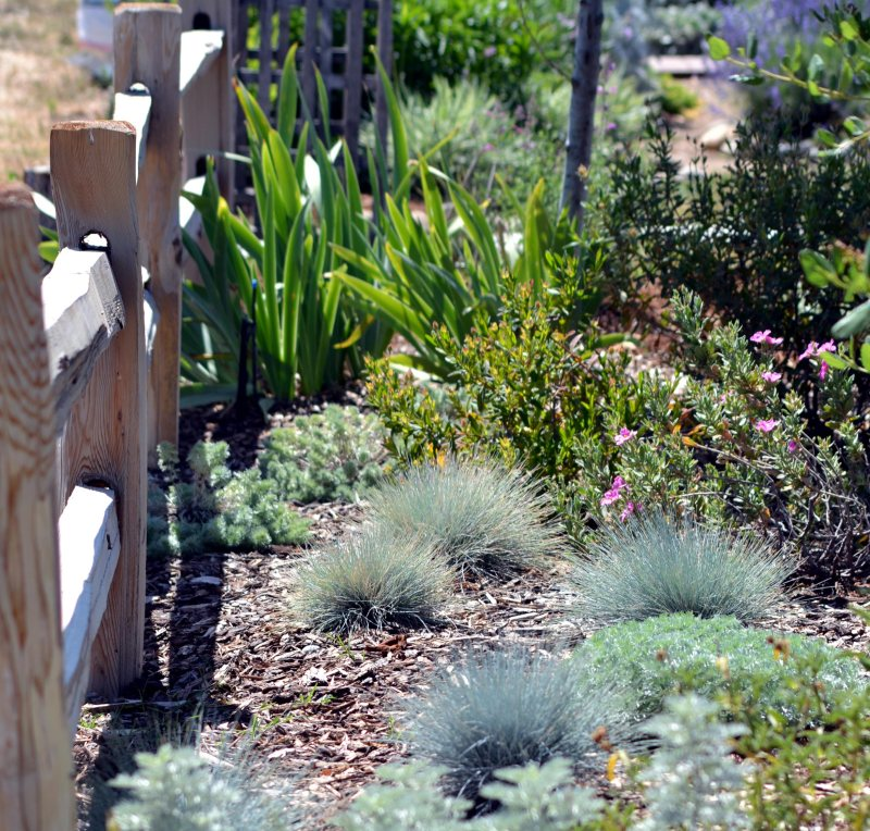 California-Garden