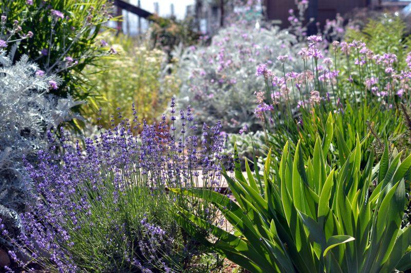 Cottage-Garden-5_24_13
