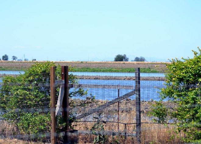 Flooded-Fields
