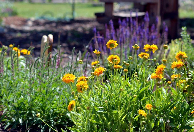 Garden3_5_13