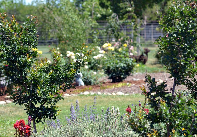 Garden6_5_13