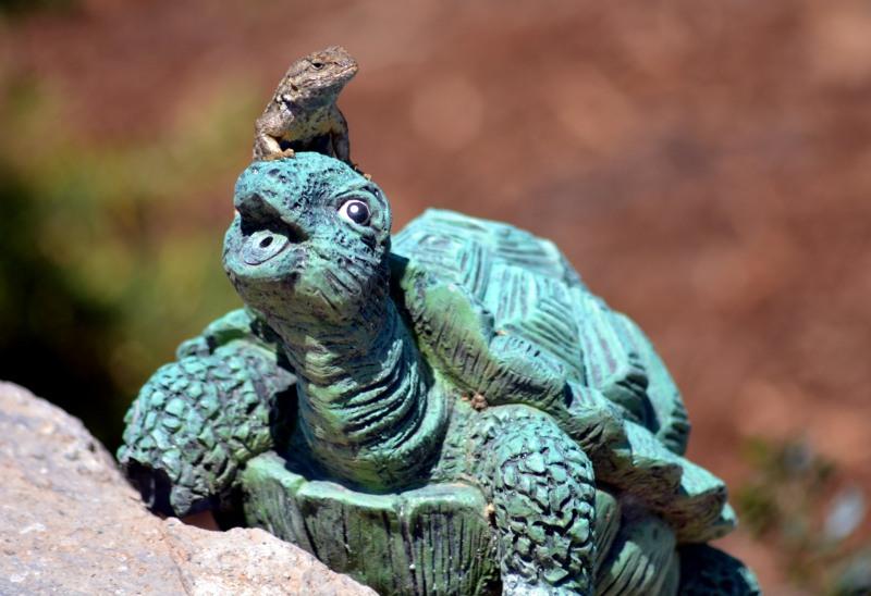 Lizard-Turtle-2