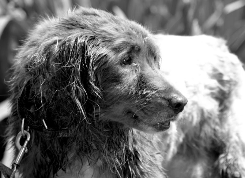 Rainier-Portrait