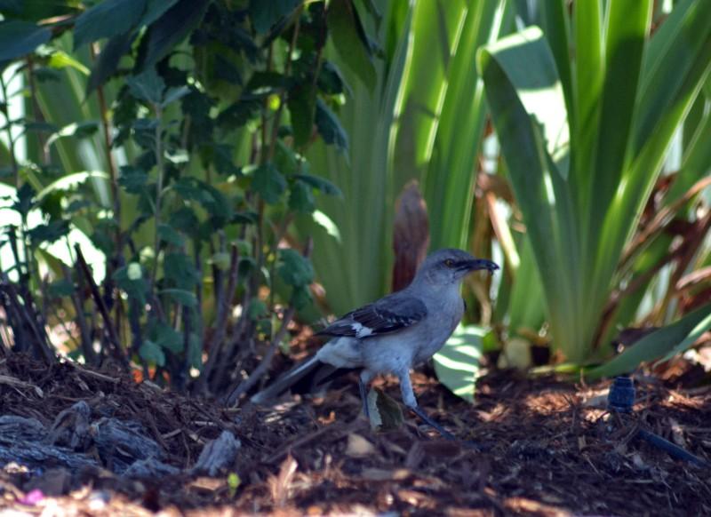 Bird-Seeks-Shade