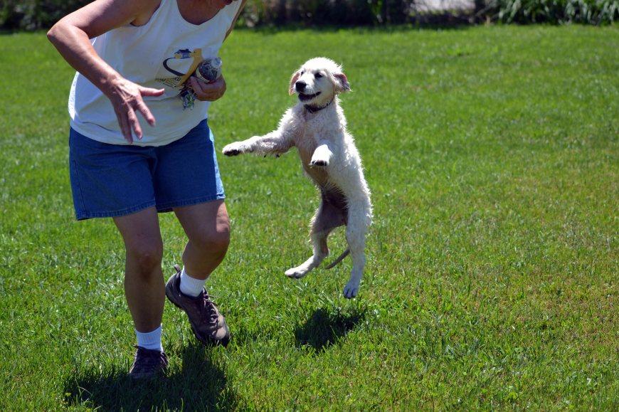Blind-Puppy-Flies