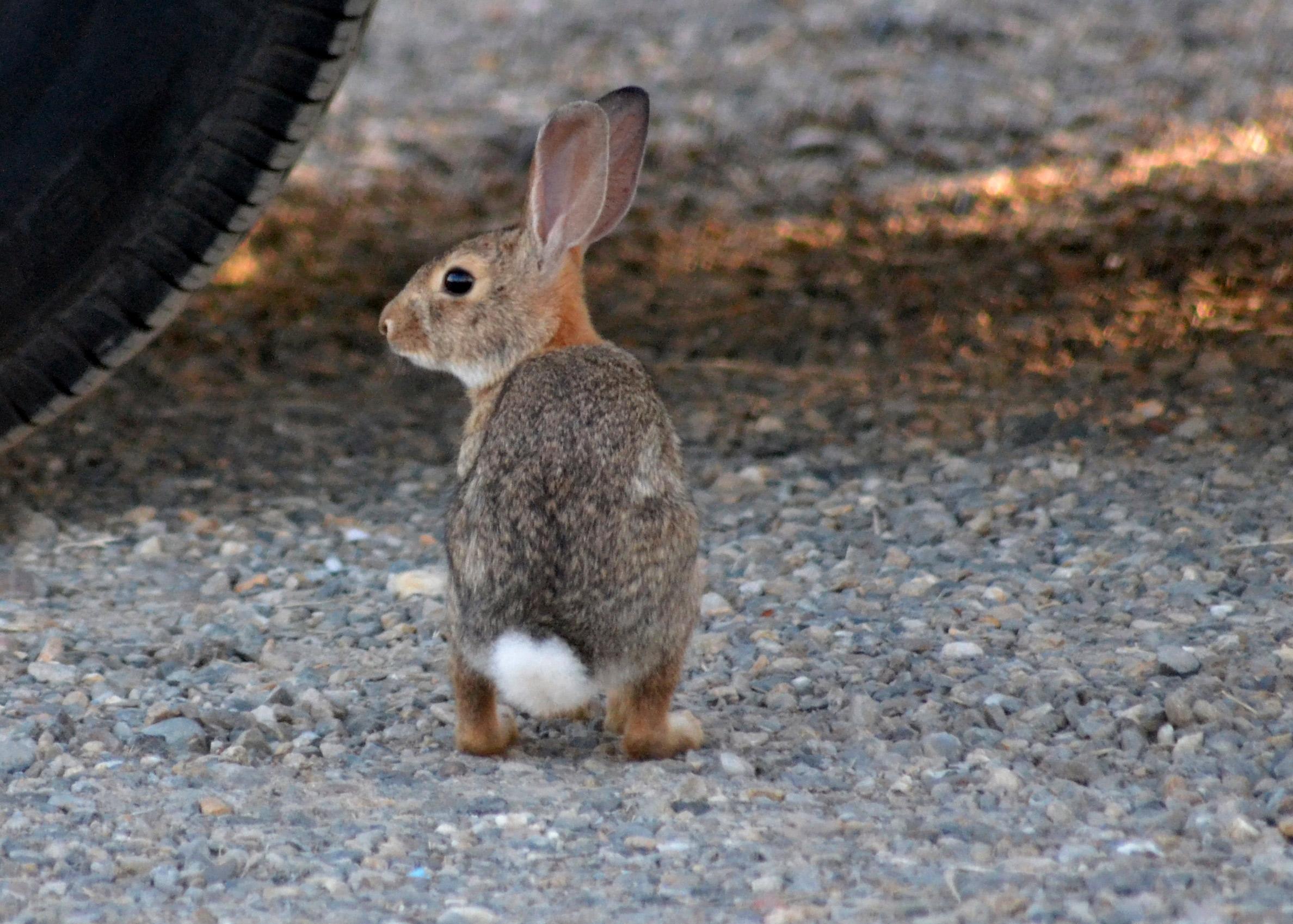 Bunny-1_6_13
