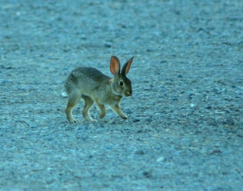 Bunny-2_6_13