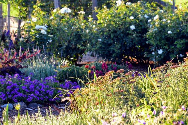Garden-4_6_13