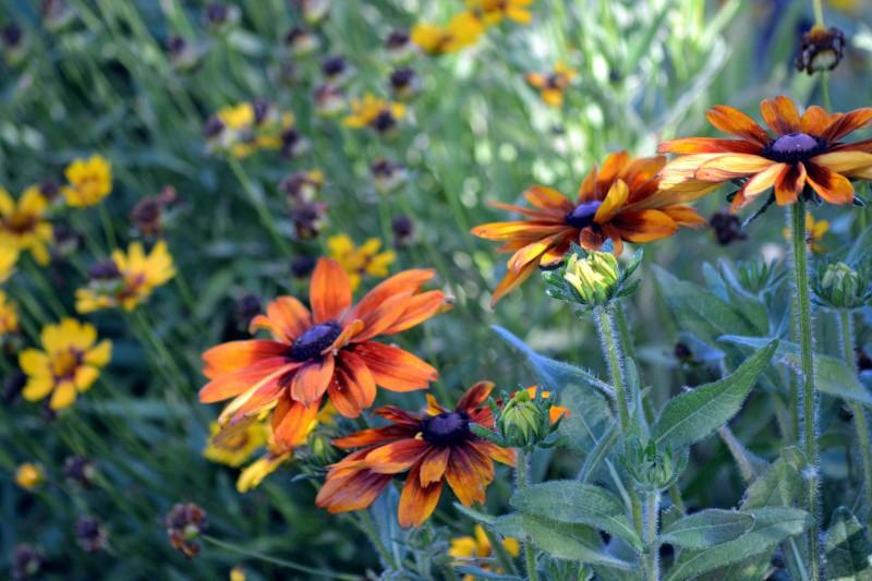 Maria's-Garden-1_6_13