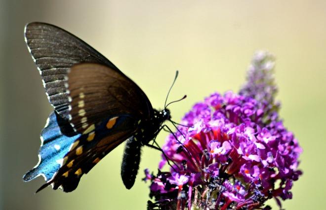 Monarch-1_6_13