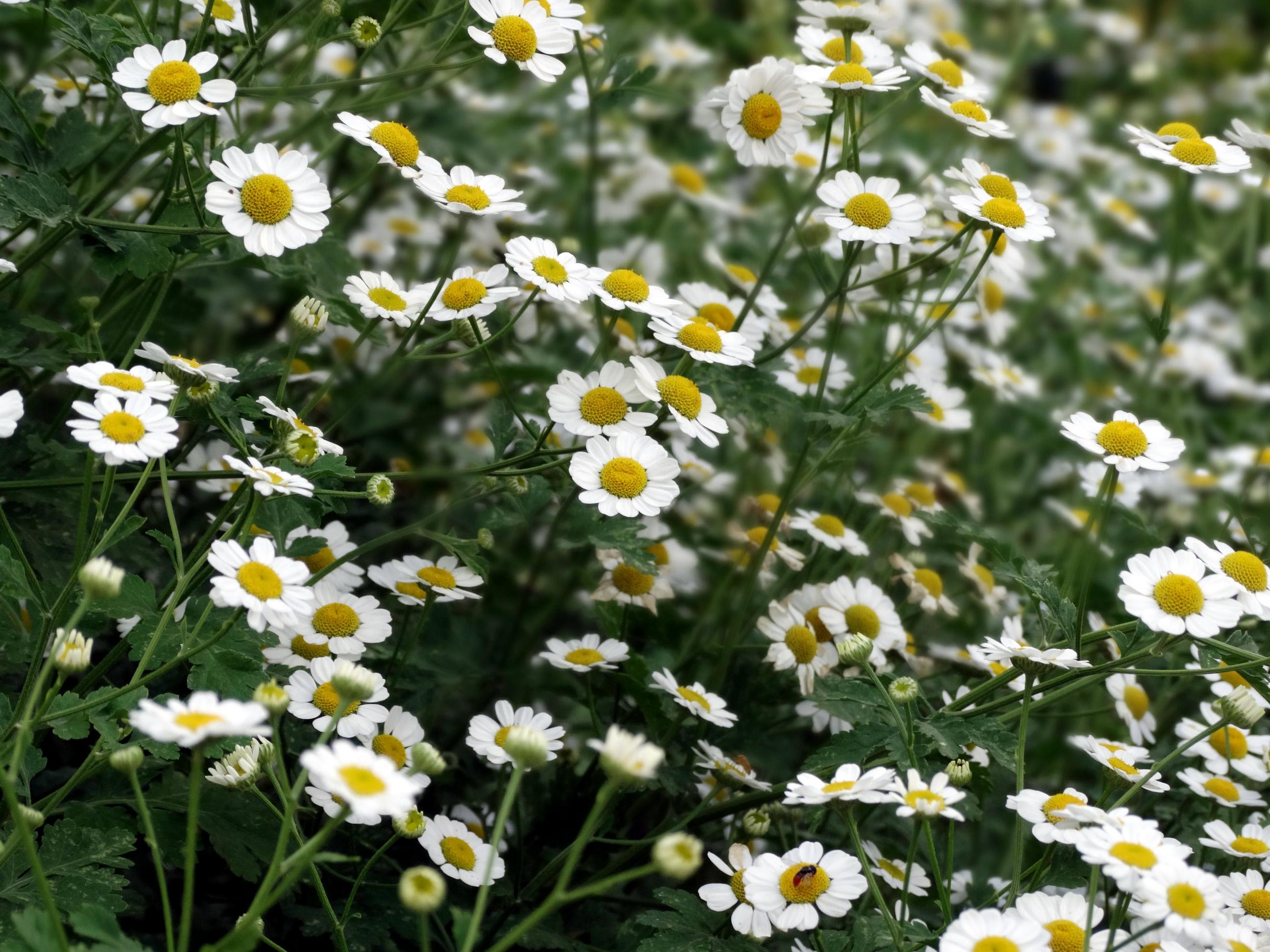 Tumblr White Flowers Comousar