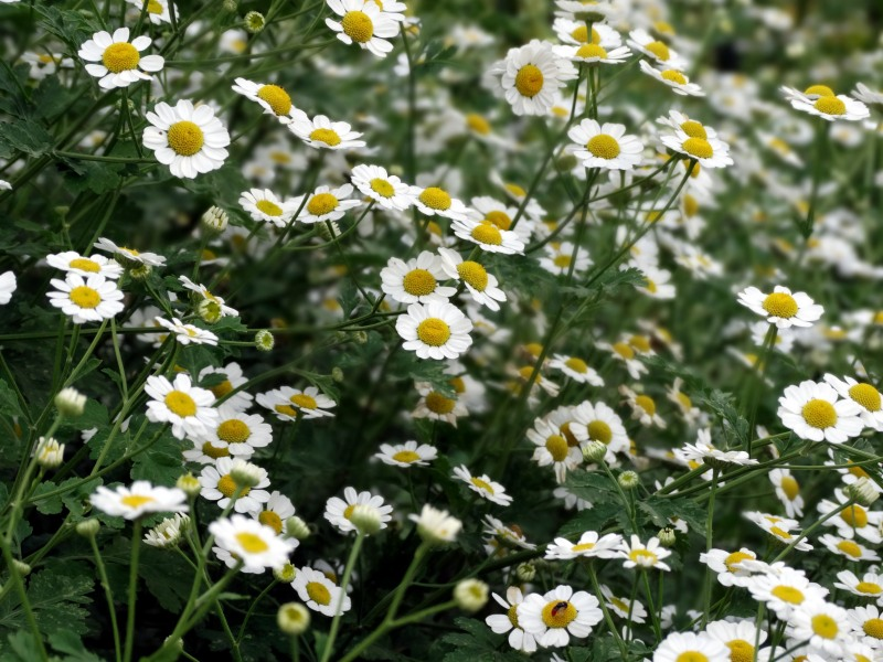 White-Flowers-6_13