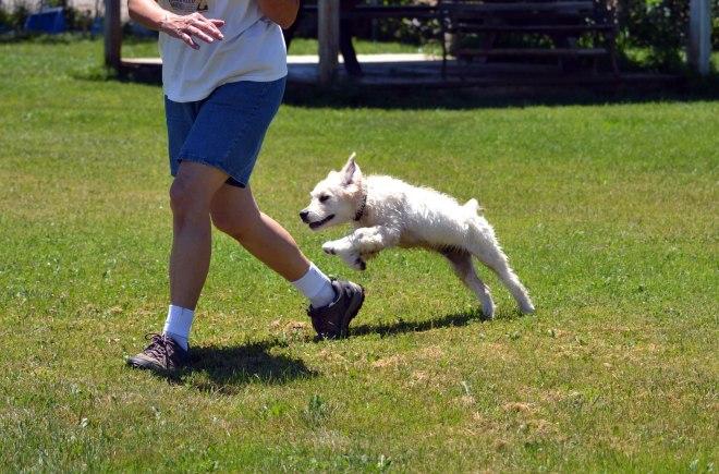 Blind-Puppy-Flies-3