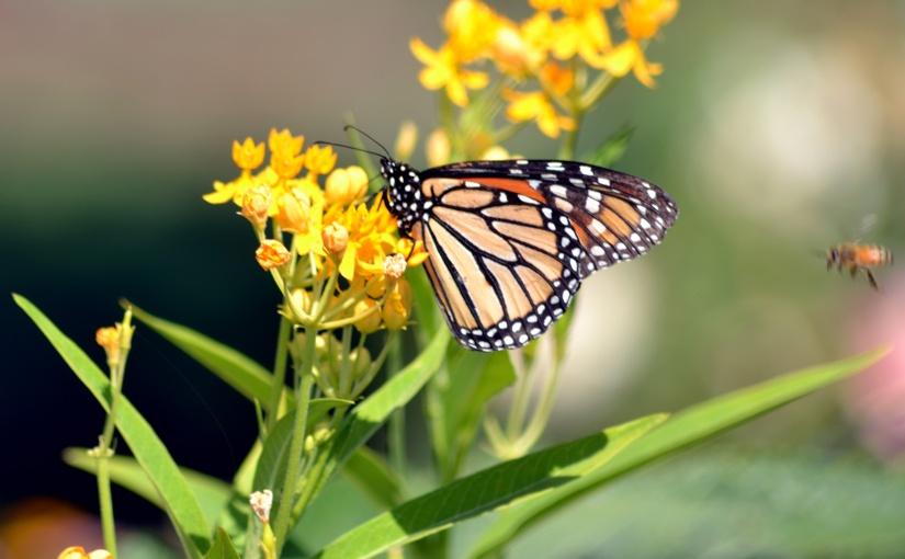 Wordless Wednesday: Flutter, Flitter,Flap