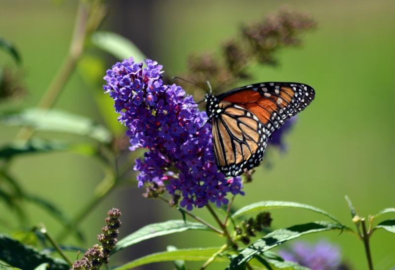 Butterfly-2-8_13