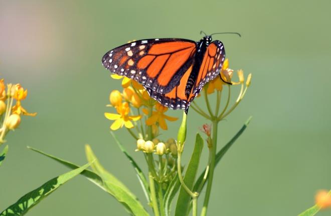 Butterfly-3-8_13
