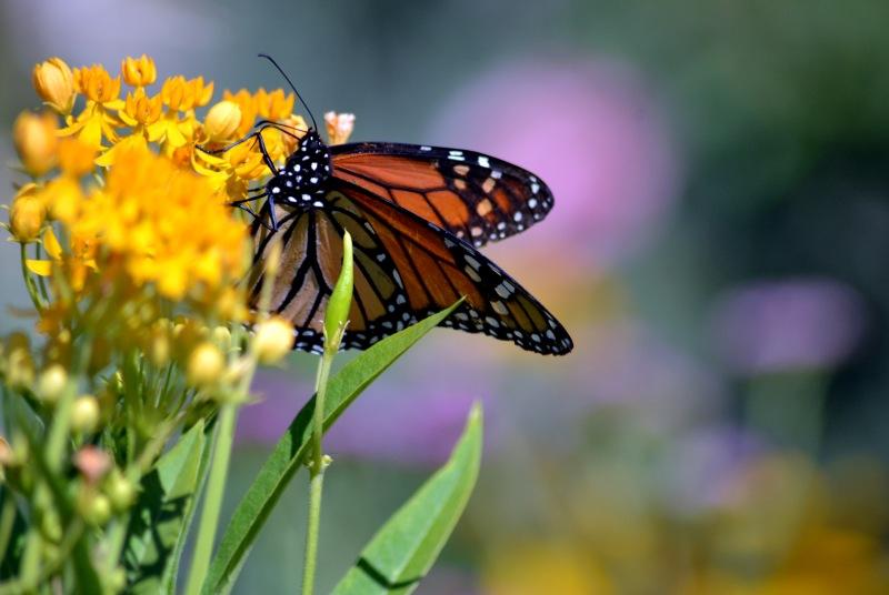 Butterfly-4-8_13