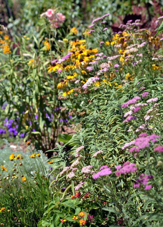 Butterfly-Garden-8_13