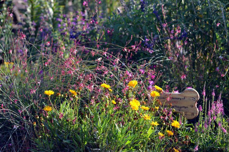 Hummingbird-Garden-Evening-8_13