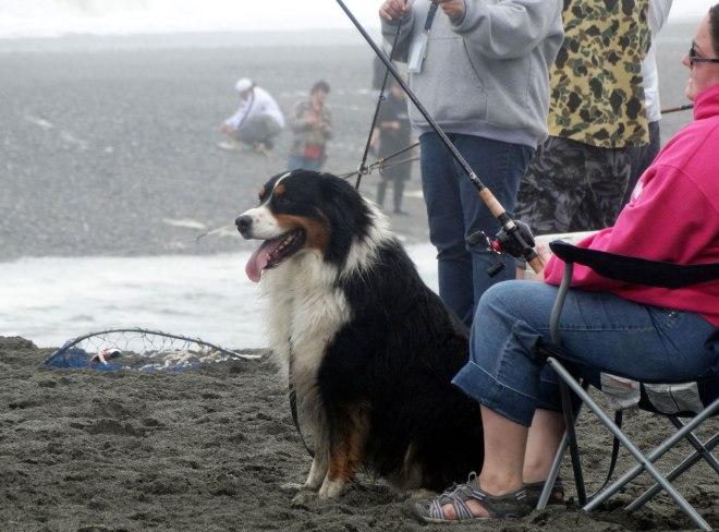 Beach-Dog2_Klamath
