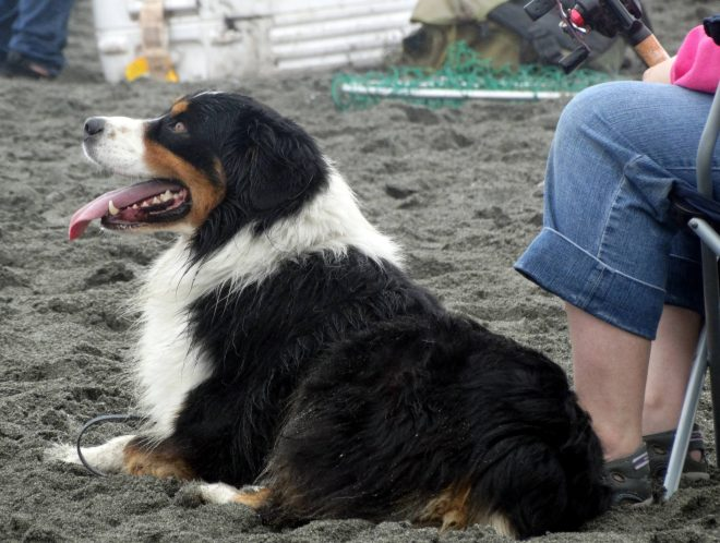 Beach-dog3_Klamath