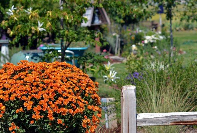 Garden_9_13_A