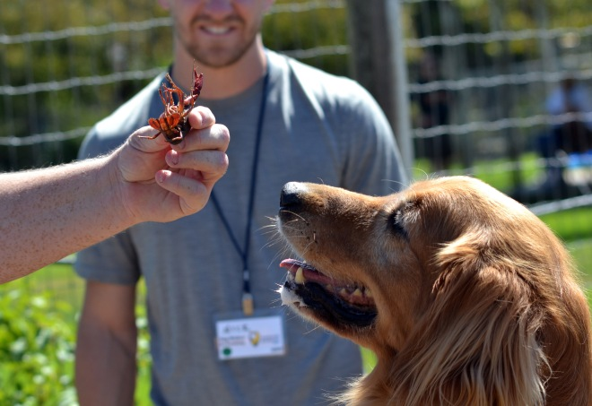 Lilly-and-Crawfish2