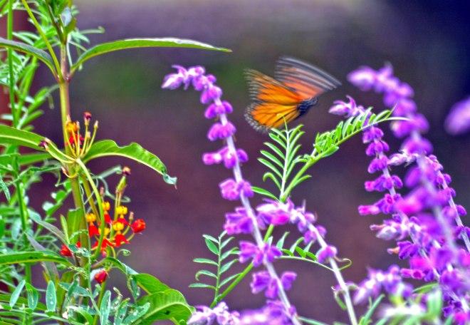 Monarch-Blurred2-9_21_13