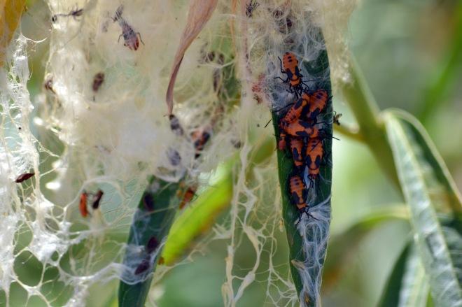 Red-Beetles-9_13