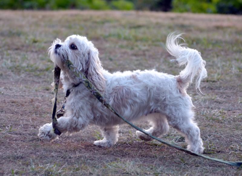 Walking-dog2_Klamath