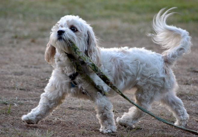 Walking-dog3_Klamath
