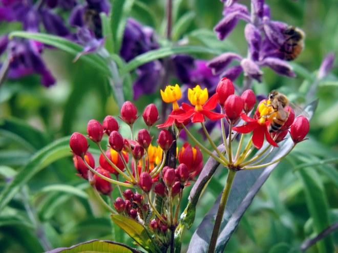 Bees-and-Larva