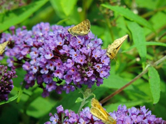 Butterflies-smiling-10_13