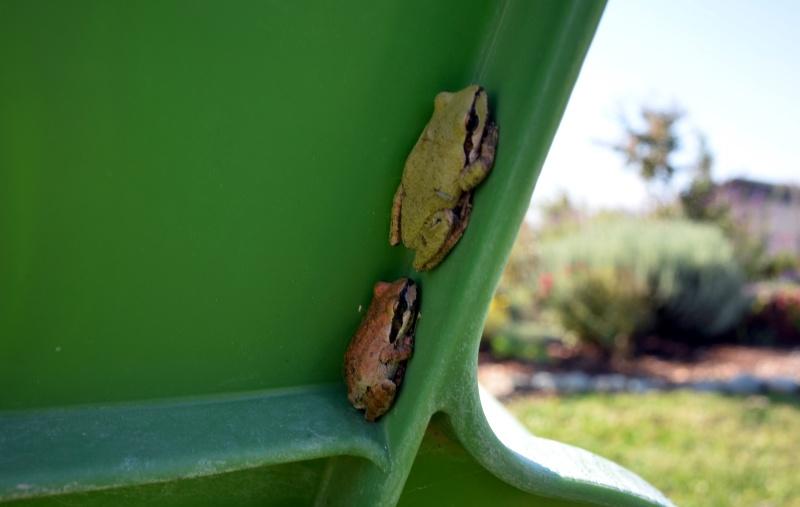 Frog-Guests-10_13