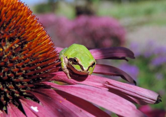 Frog2-10_20_13