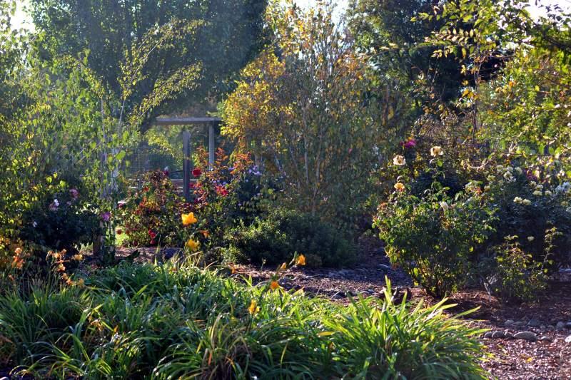 Garden-Fall-10_13
