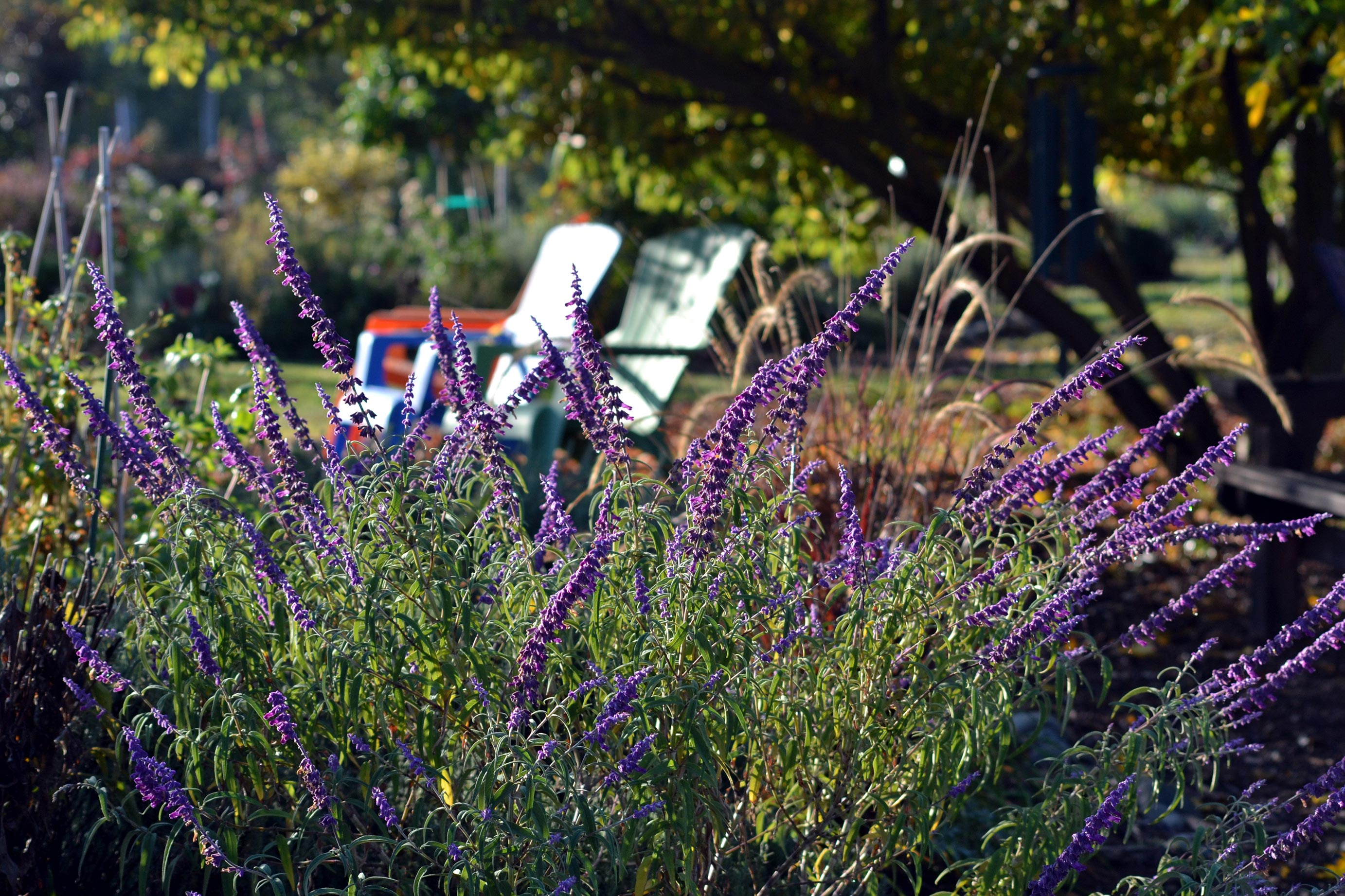 Mexican-Sage-Chairs-10_13