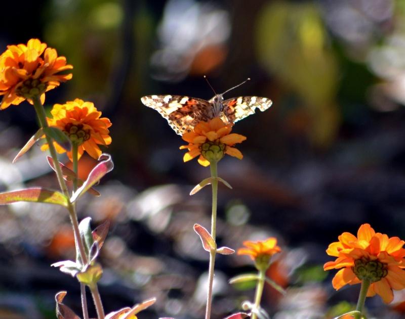 Butterfly-11_17_13