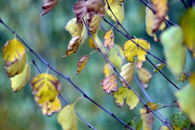 Fall-Leaves2-11_13