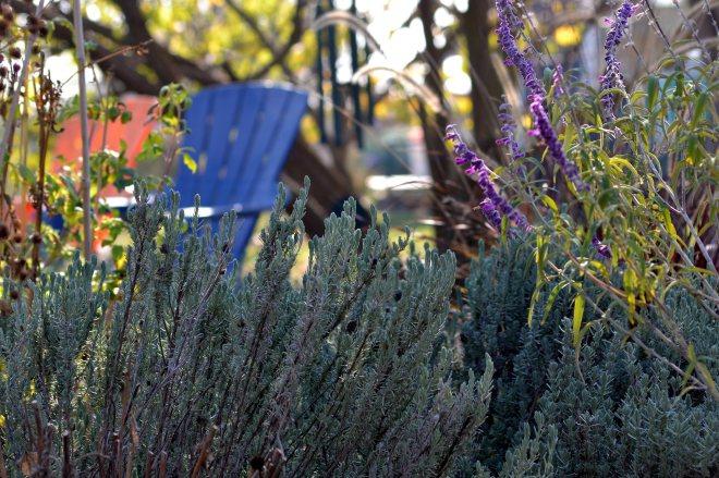 Garden-11_23_13