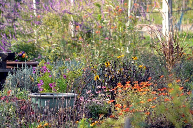 Garden-Fall3-11_29_13