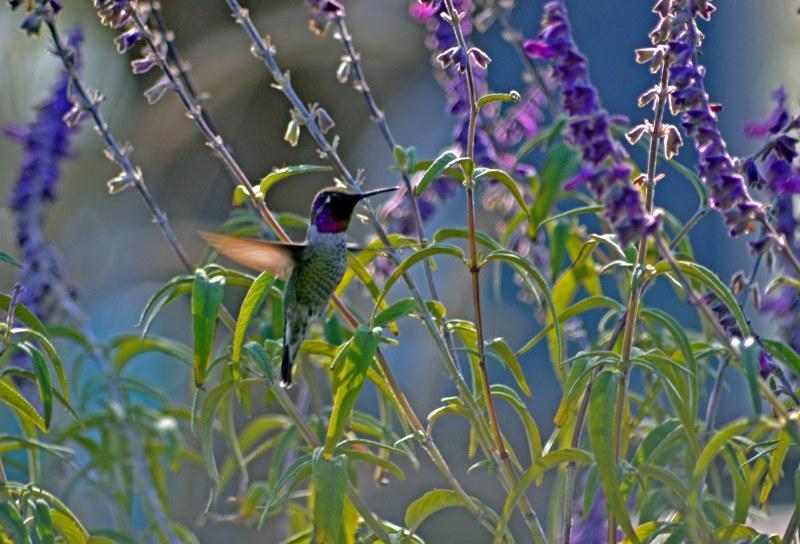 Hummingbird-Floating-11_25_13