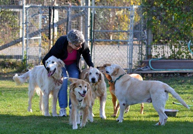 Senior-Dogs