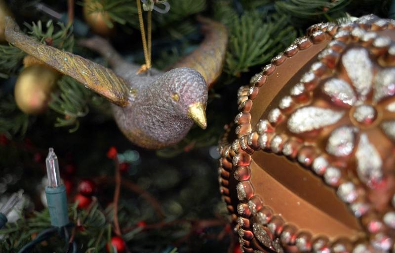 Bird-Bulb