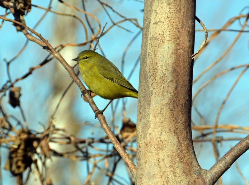 Bird3-12-29_13