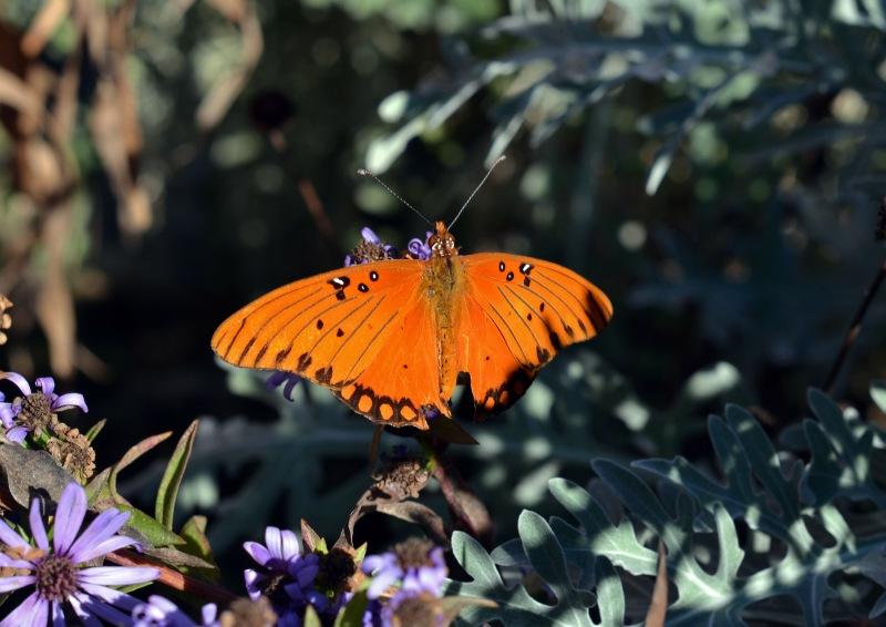 Butterfly-11_30_13