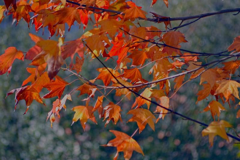 Fall-leaves-2-11_30_13