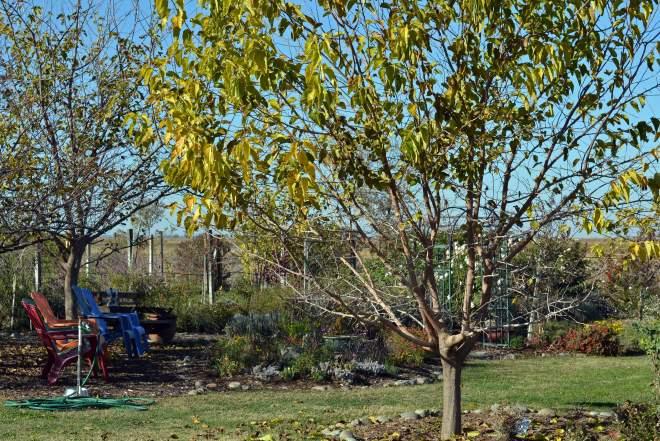 Garden-Fall-11_30_13
