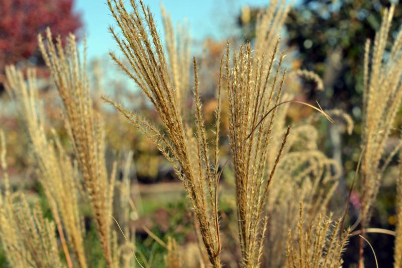 Grasses-11-30_13