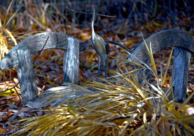 Grasses-12_29_13